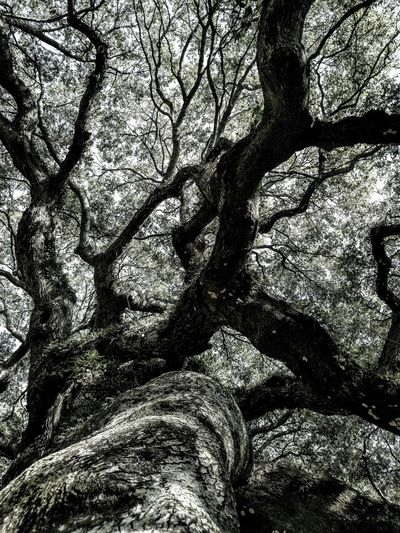 I love this tree. It brings back good memories of when i was a little girl. My parents use to take us to the Angel Oak Tree. Johns Island South Carolina Getting Inspired Eye4photography  Hello World I Love Taking Pictures <3 Cellphone Photography Angel Oak EyeEm Nature Lover Having Fun