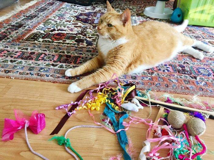 Pets Domestic Cat My Cat😺🐈 Art Is Everywhere Cat Posing For Me Cat Posing 3XPSUnity Cat Model EmNewHere Thinking Cat The Cat Condition Cat Playground Myself Cat Collection Multi Colored Cat Eyes Cat Photography Cats 🐱 Cat Lovers 🐱💞 Katzenfoto!