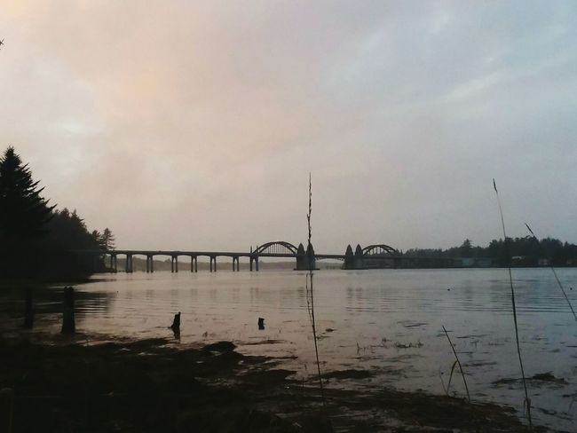 southern view siuslaw bridge EyeEm Nature Lover Beauty In Nature Beauty In Ordinary Things Beauty Is Everywhere  Siuslaw River Siuslaw River Bridge Bridge - Man Made Structure Bridge Bridges Bird Water Tree Silhouette Lake Reflection Sky Cloud - Sky Waterfront Arch Bridge Bare Tree Sunset