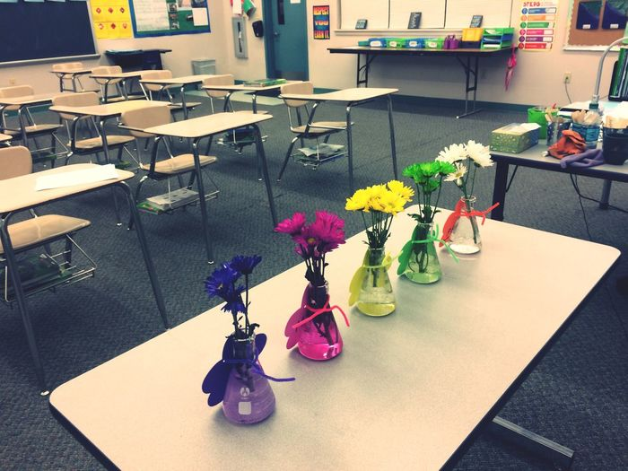 Flower High Angle View Table Fragility Plant Science Nature Indoors  Freshness Day Science Science Class Classroom Desks School Education Learning Teacher Science Classroom Plant Genetics Plant Crossing Genes Punnett Square Botany Botanical Beakers