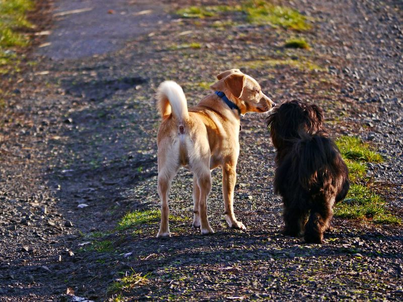 Mammal Animal Themes Animal Domestic Pets Domestic Animals Canine Vertebrate Land Nature Day Field Standing No People Full Length Outdoors Dogs Shi Tzu Friendship Way Ahead Light And Shadow Morning Light