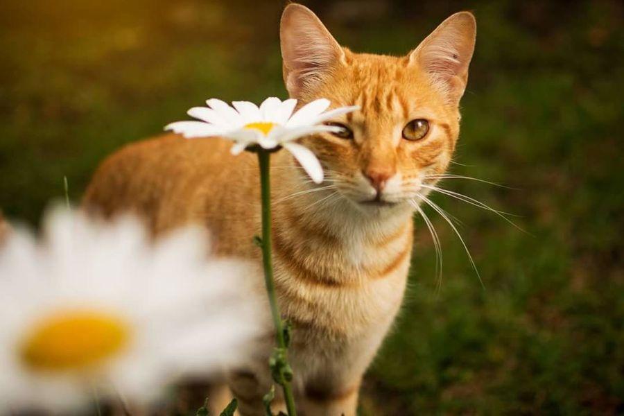 cat flowers Gatos Gato Felino Felinos Feline Pet Pets Yellow Yellowcat Animal Themes Animals Nature Flower Cat, Pets, Animal First Eyeem Photo