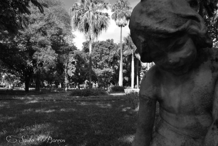 Parque Da Luz Sao Paulo - Brazil São Paulo, Brasil São Paulo SauloBarros Parque  Parque Luz Nature Photography Natureza Perfeita♡♥ NaturezaMaravilhosa One Person Young Adult Tree Day Real People Lifestyles Leisure Activity Outdoors Shirtless Close-up Water Men One Man Only Only Men Adults Only EyeEmNewHere The Week On EyeEm