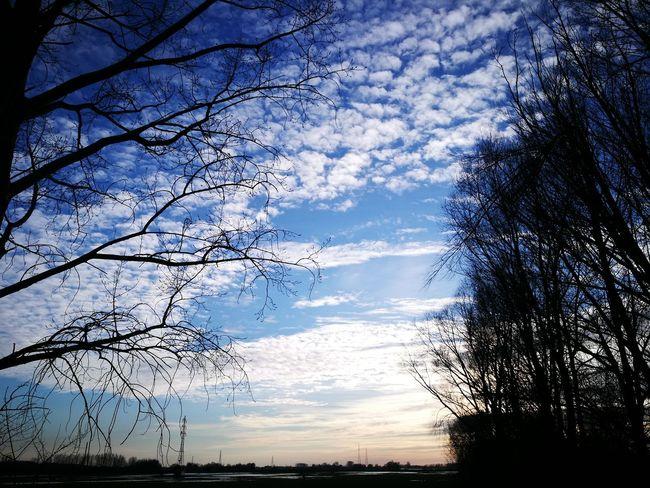 """One """"Uiterwaarden"""" @Wageningen Nature Silhouette Tree Sky Reflection Water Beauty In Nature Sunset No People Outdoors"""
