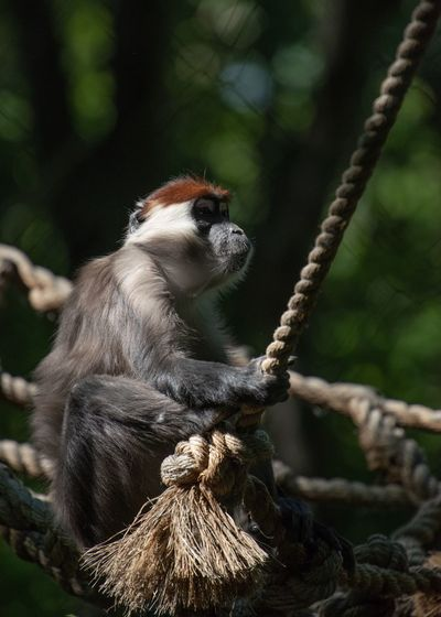 Animal Wildlife Animal Themes Primate Monkey Animal One Animal Mammal Zoo Looking Away Sitting