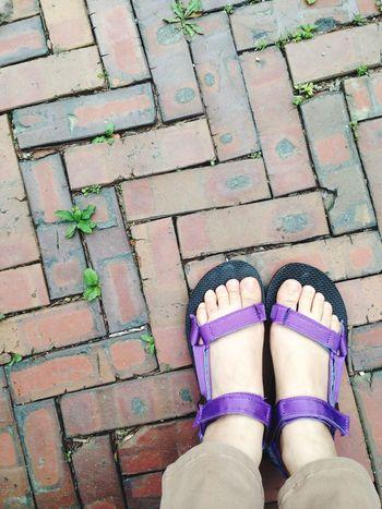 Teva Sandals Purple Bricks