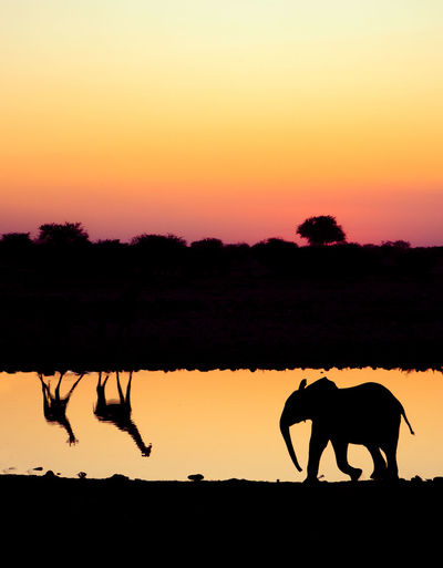 Silhouette elephant on landscape against sky during sunset