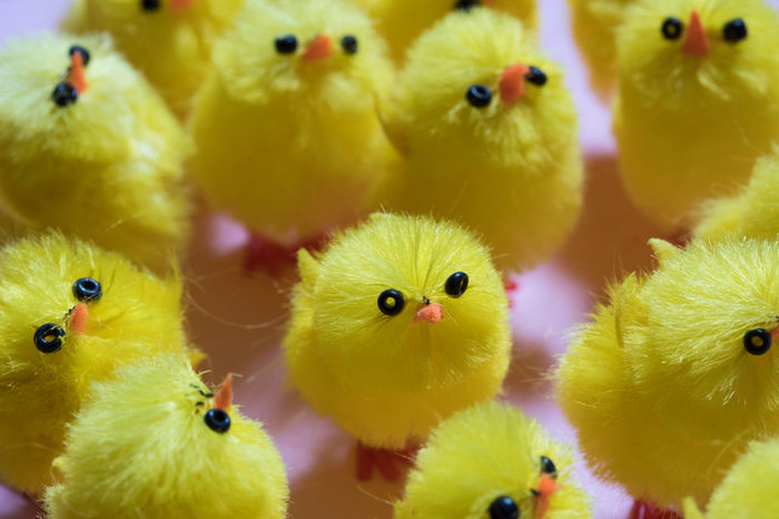 The army of chicks Chicks Easter Easter Ready Easter Sunday Toys Animal Themes Baby Chicken Bird Chicken - Bird Chicklet Close-up Day Domestic Animals Easter Chicks Festive Full Frame Indoors  No People Season  Seasonal Toy Toy Photography Yellow Yellow Color Young Bird