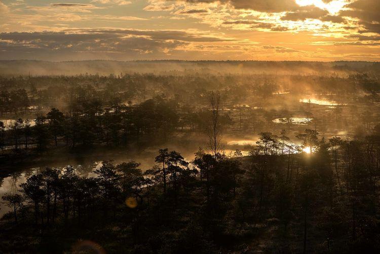 Early mornig in kemeri national park,latvia
