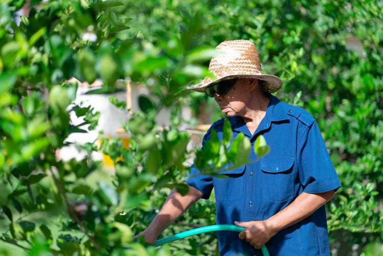 Senior man watering plants at farm