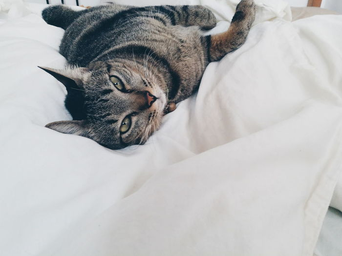 Valentine Tabby Cat Lazycat First Eyeem Photo