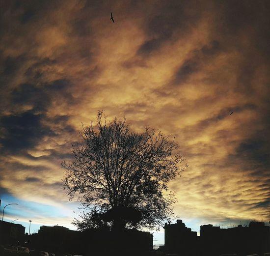 Tree Sunset Silhouette Sky Cloud - Sky Dramatic Sky Romantic Sky Cloudscape