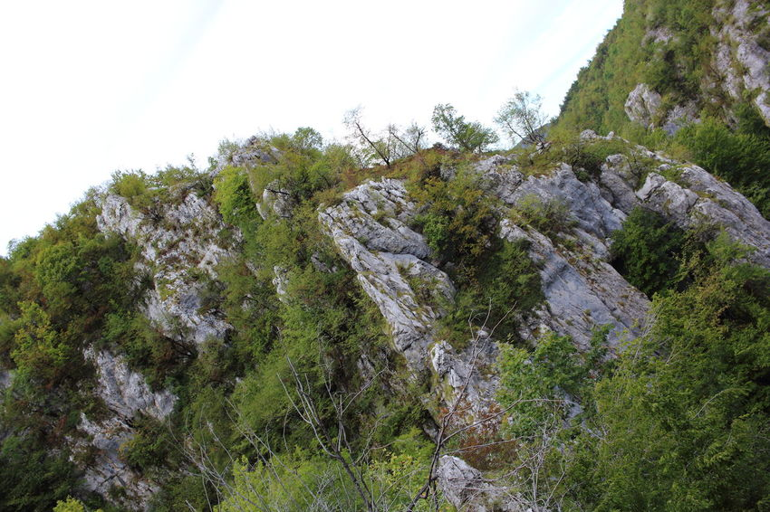 Croatia Djmarcop Trip Scenics Mountain Adventure Tree Day Beauty In Nature No People Outdoors Forest Growth Tranquility Tranquil Scene Rock Formation Nature Rock - Object Cliff Sky Close-up