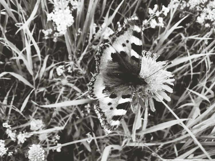 Butterfly Butterfly - Insect Camouflage Camouflage Animals Camouflaged Insect Camoflauge Blackandwhite Black & White Black And White Collection  Black And White Black And White Photography Blackandwhite Photography Blackandwhitephotography