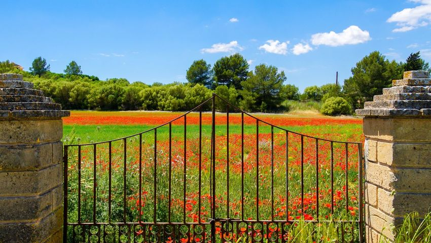 Agriculture Architecture Beauty In Nature Cloud - Sky Clouds And Sky Day Field Field Flowers Gate Green Color Growth Nature No People Outdoors Protection Red Rural Scene Scenics Sky Tree