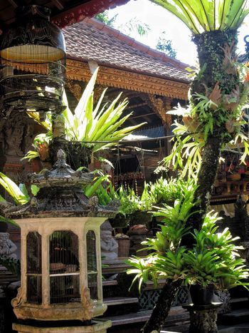 Balinese Courtyard  Ferns Birdcages Traditional Tropical Sunlight No People Ubud Balinese Architecture Bali INDONESIA