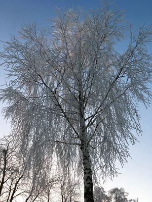 Branch Clear Sky Close-up Frost Growth Low Angle View Nature No People Sky Tree Tree