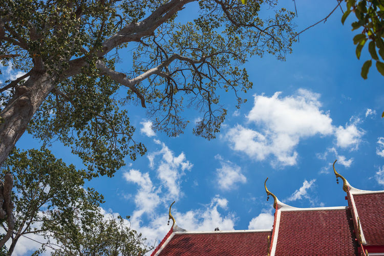 Sky Architecture Cloud - Sky No People Nature Day Outdoors Tree Building Low Angle View Built Structure Roof Plant Building Exterior Branch House Growth Blue High Section Sunlight Roof Tile