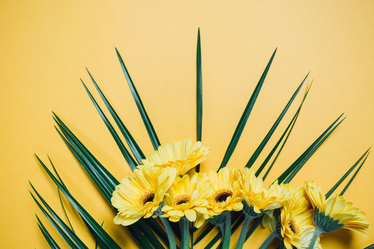 Close-up of yellow flower over colored background