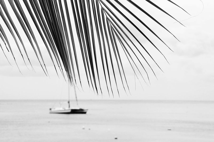Sea Water Transportation Nautical Vessel Outdoors No People Nature Horizon Over Water Sky Mode Of Transport Tranquility Waterfront Day Scenics Sailboat Beauty In Nature Mast Close-up Sailing Ship Catamaran Katamaran Mexico