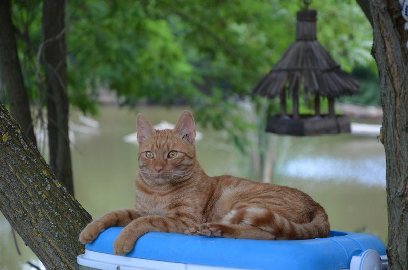 Cat sitting against lake