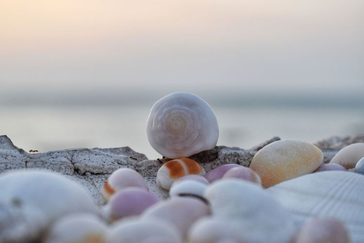 Sea Shell Water Selective Focus Beach Animal Shell Nature Close-up Seashell Land Solid Stone - Object Pebble Rock Large Group Of Objects Sky Beauty In Nature Stone Horizon No People Horizon Over Water Outdoors Surface Level