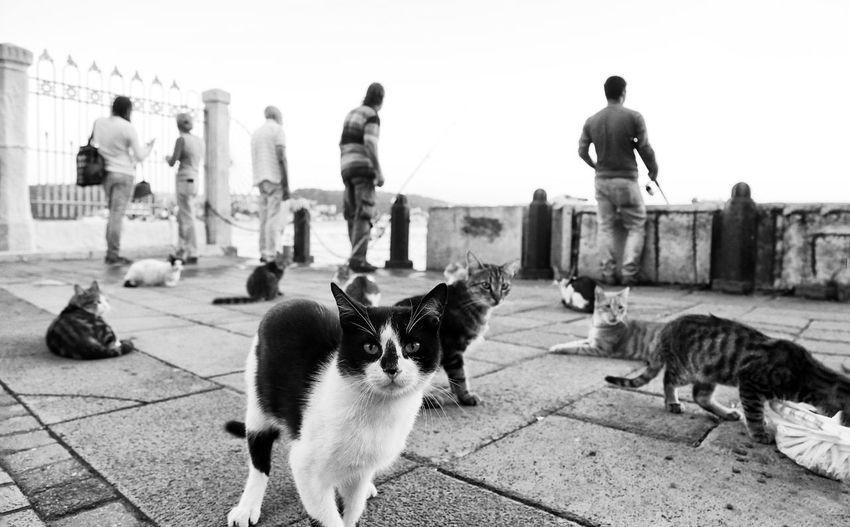 Full length of cat on street in city