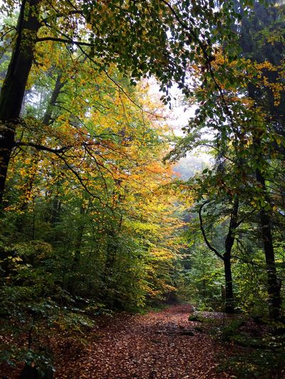 Herbst auf dem Waldstein. Nature Natural Natural Beauty Forest In The Forest Trees Path Waldstein Fichtelgebirge