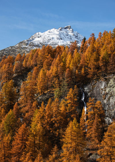 Trees on mountain during autumn against sky