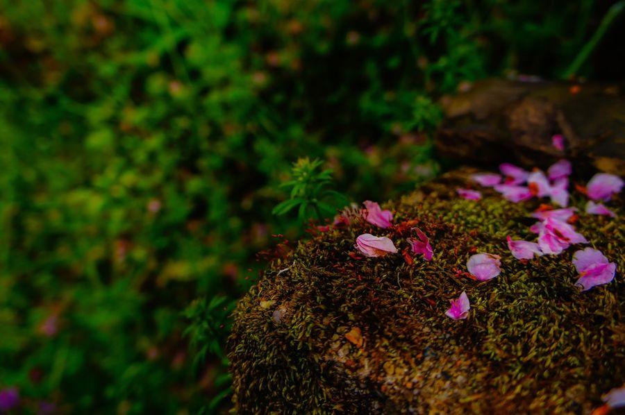 EyeEmBestPics EyeEm Best Shots - Nature EyeEm Best Shots EyeEm Nature Lover Japan EyeEm Gallery World Heritage Moss