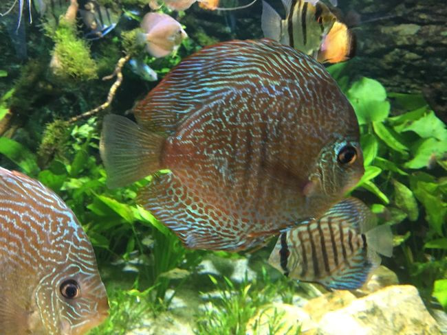 Animal Animal Themes Animals In The Wild Animal Wildlife Vertebrate Water Swimming Fish Underwater
