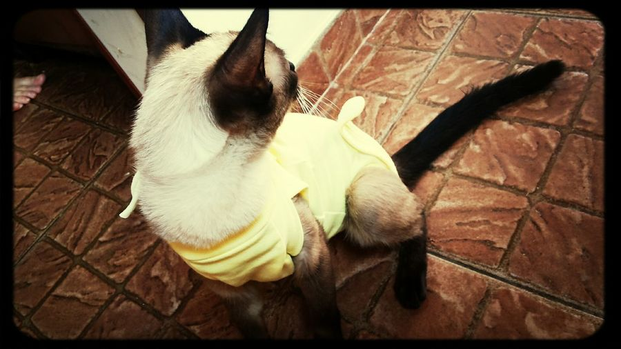 Princesa de roupinha amarelinha