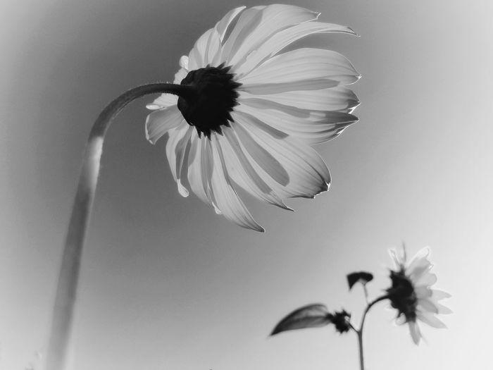 ⚪️🌻 Flower