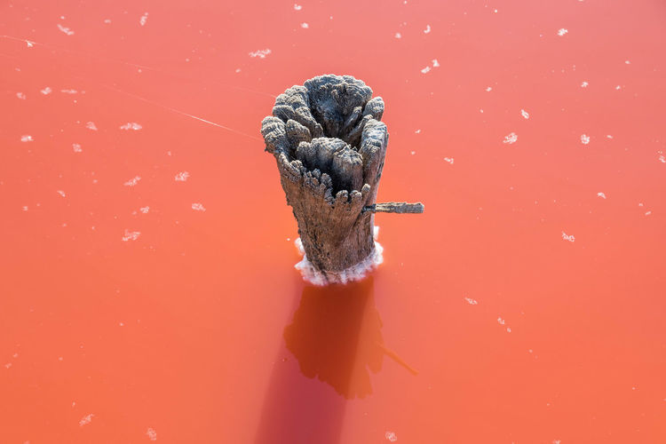 Close-up of fresh pink water against red background
