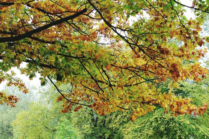 London getting Ready For Winter Autnum Colors Colors Of Autumn Autumn 2015 Acton Parklife