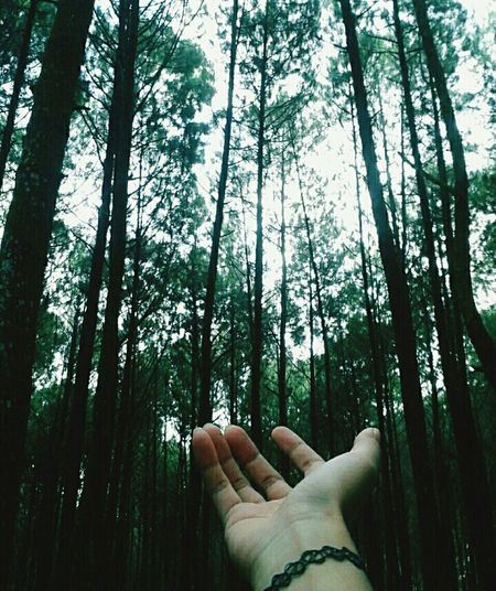 Pineforest Taking Photos follow my ig: casper_vy