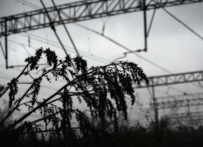 трава травы Grass осень Rain Industrial Black And White Electricity Pylon Electricity
