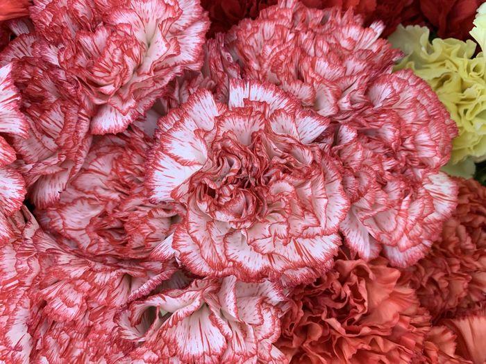 Full frame shot of pink roses in market