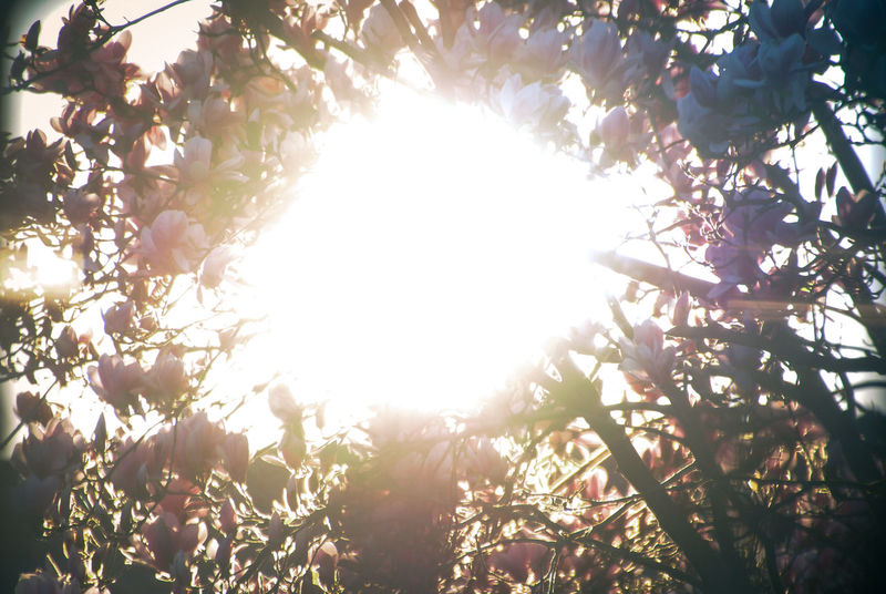 Back Lit Background Beauty In Nature Branch Bright Circle Clear Sky Pivotal Ideas Freshness Growth Komorebi Leaf Lens Flare Nature Outdoors Pattern Sky Sun Sunbeam Sunlight Sunny Sunset Tranquility Tree 43 Golden Moments
