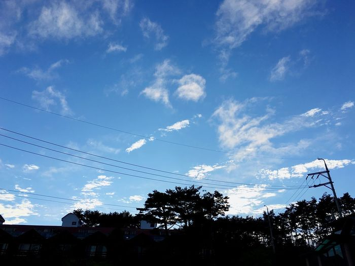 Sky Sky Cloud - Sky Tree Plant Nature Low Angle View Silhouette No People Blue Beauty In Nature Outdoors