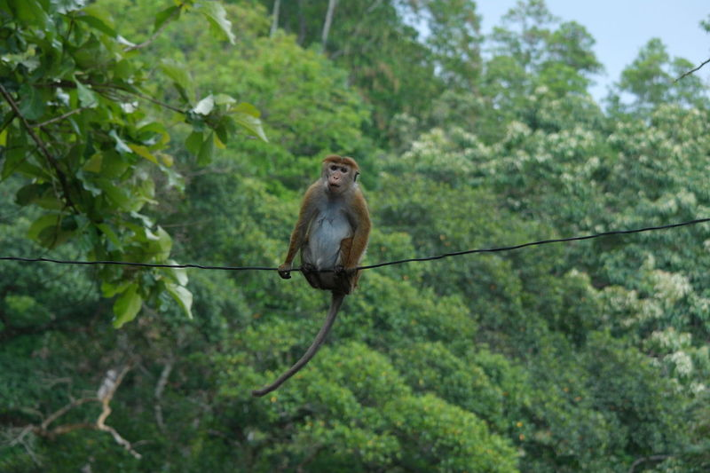 Monkey on wire Animal Animal Themes Animals In The Wild Forest Mammal Monkey Nature Outdoors Primate EyeEmNewHere