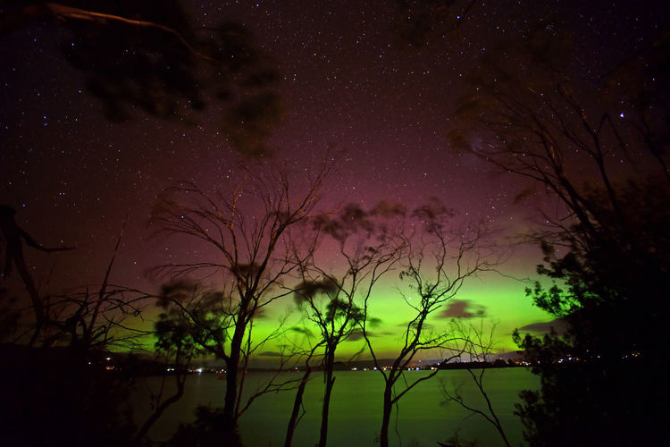 Astronomy Beauty In Nature Constellation Foreground Galaxy Growth Long Exposure Milky Way Nature Night No People Outdoors Scenics Sky Space Star - Space Starry Tranquil Scene Tranquility Tree Aurora Aurora Australis