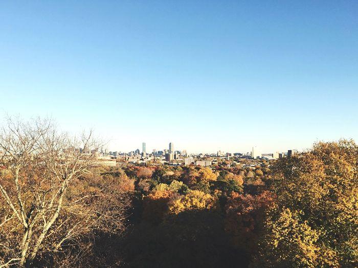 Amazing View Boston Foliage