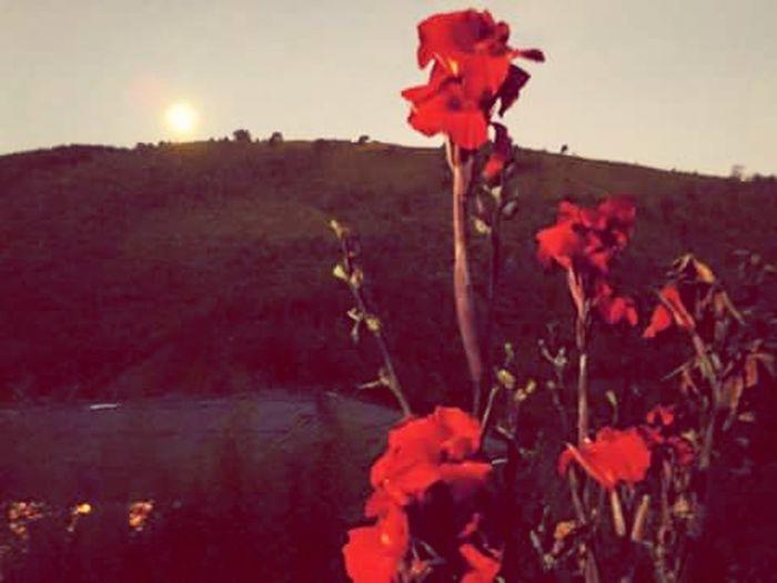 Flowers Sky Sun ☀