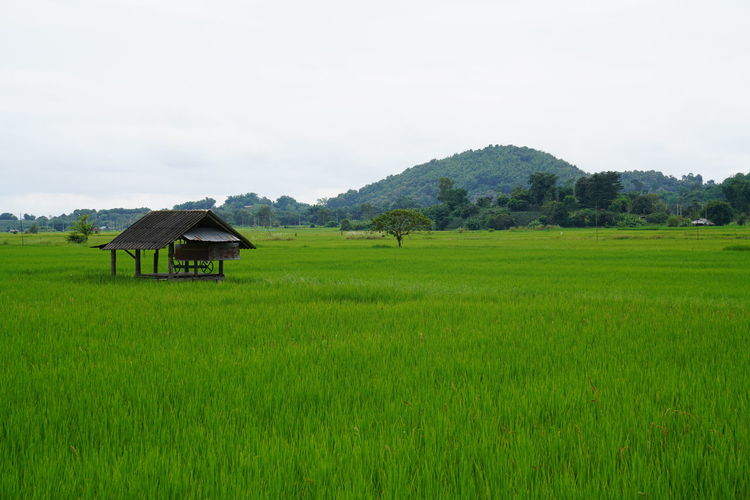 Plant Land Field Landscape Green Color Scenics - Nature Sky Beauty In Nature Nature Environment Grass Rural Scene Tranquility Tranquil Scene Architecture Tree Built Structure Agriculture Growth No People Farm Outdoors