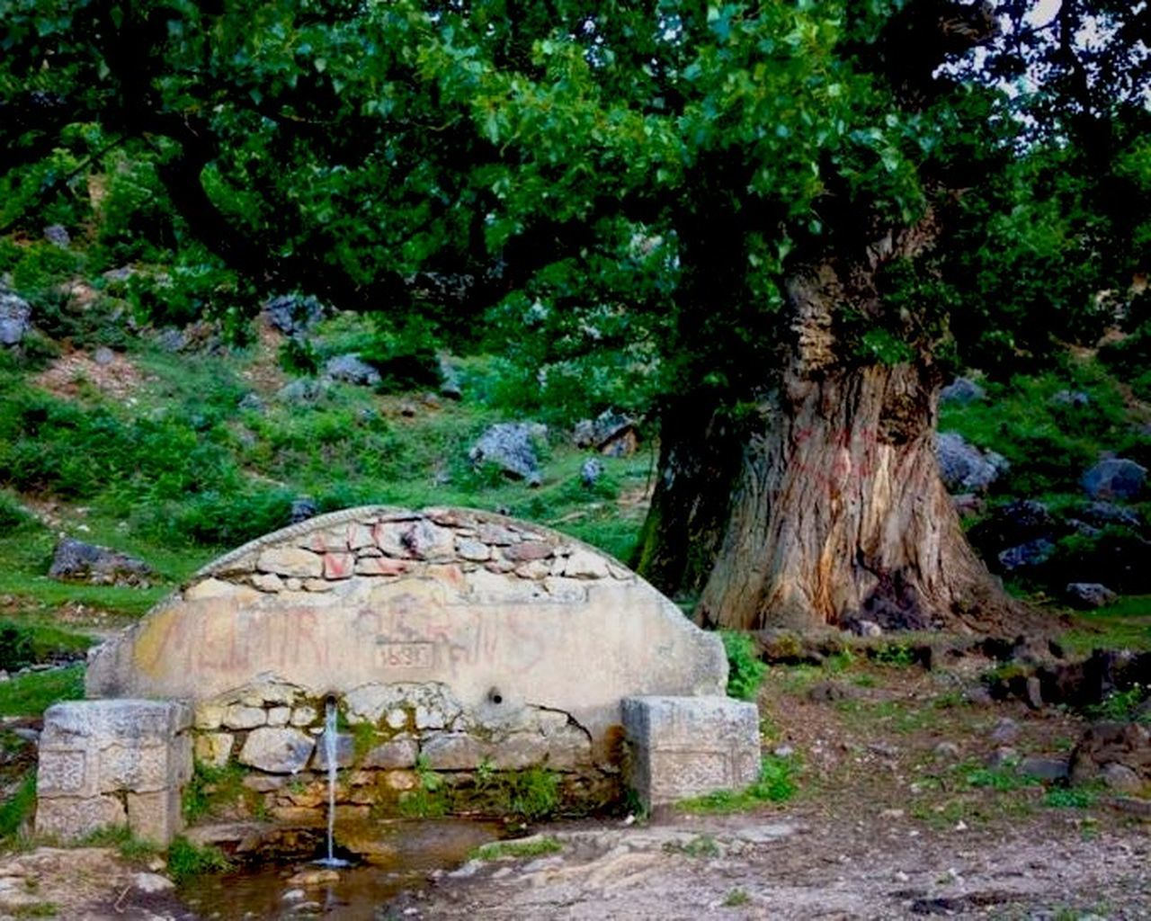 tree, history, day, no people, outdoors, nature, beauty in nature