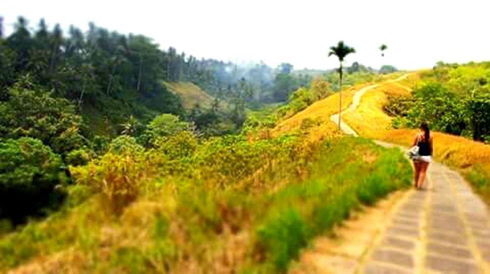 Getting lost in nature...Ubud Ubud, Bali INDONESIA Indonesia_photography Ricefield Rice Terraces Ubud Nature
