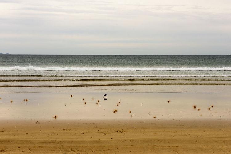 Beach Beachphotography Bird Birds Gold Golden Bay Golden Beach Red Lips Sand Sea South Pacifik Oce