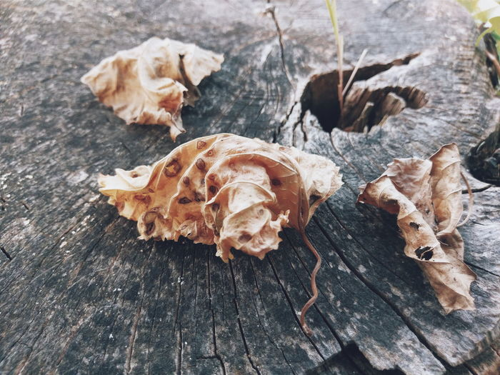 High angle view of crumpled dry leaves on tree stump