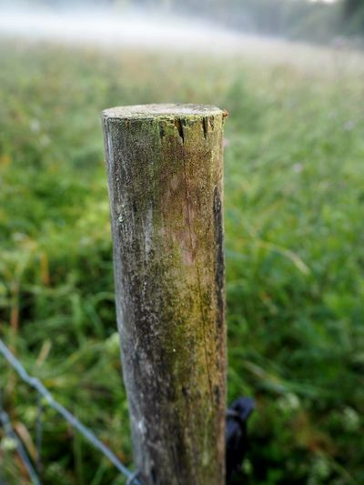 Wooden Post Grass No People Focus On Foreground Outdoors Nature Close-up